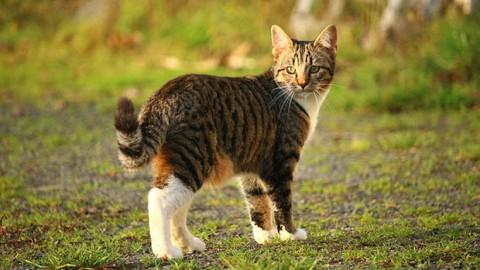 I più bei proverbi sui gatti – GraphoMania (Blog)