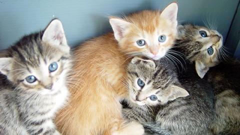 Frasi sui gatti, le più intense e profonde – GraphoMania (Blog)