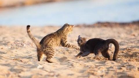 San Vero Milis: multa da 1000 euro per avere abbandonato un gatto … – L'Unione Sarda