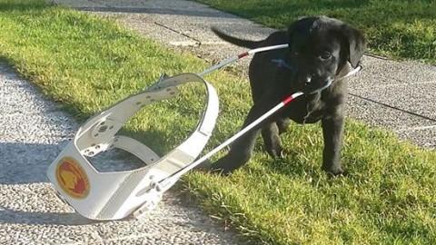 Come si vive con un cane guida? Lo racconta una giornalista non … – Redattore Sociale