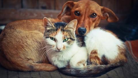 Chi ama di più gli esseri umani, i cani o i gatti? Ecco la risposta – L'Huffington Post