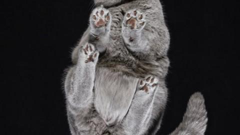 Le foto di questi gatti sulle fotocopiatrici sono divertentissime (FOTO) – L'Huffington Post