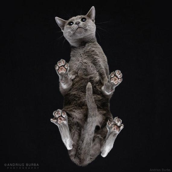 gatto 9