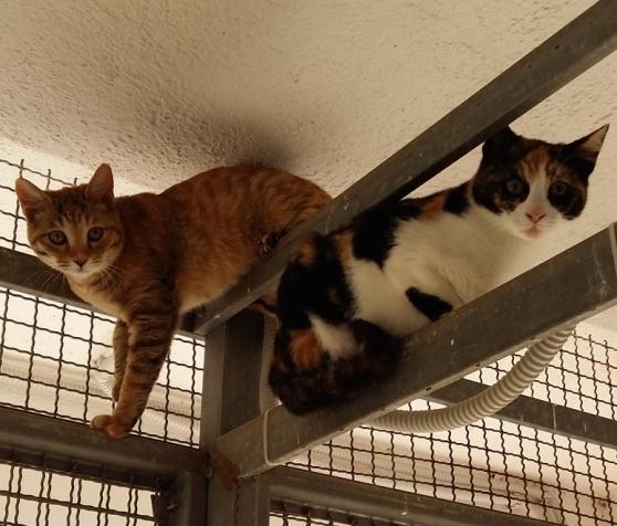 Due ospiti del gattile