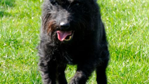 Quasimodo, il cane gobbo più amato del Web – Vanity Fair.it