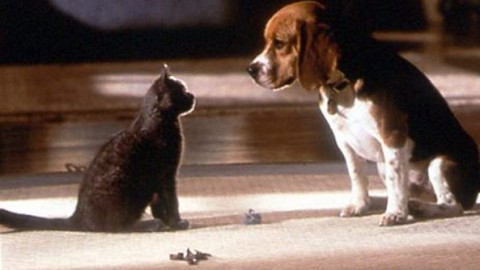 Lo studio conferma: chi ha un cane in case è più felice di chi ha un … – Corriere della Sera