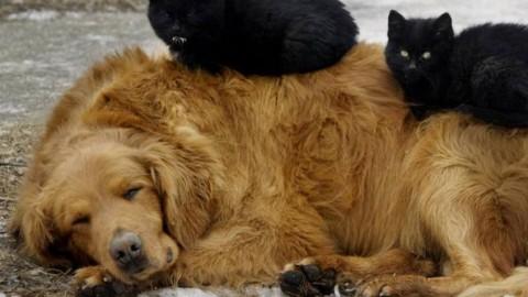 Il gatto? Costa 800 euro l'anno (per il cane almeno mille in più) – Corriere della Sera