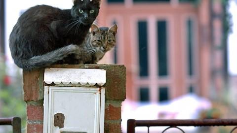 E' la Giornata mondiale del Gatto, ecco i mici dei nostri lettori – Corriere della Sera