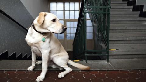 Regolamento di condominio 2016: animali domestici, rumori e orari – ForexInfo.it