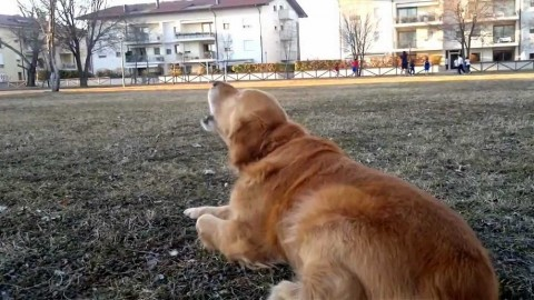 Abbaio e rumore cane del vicino: come denunciare? – ForexInfo.it