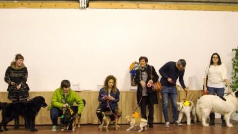 Festa del Cane Bastardino: Emiliano Geri di Radio Lady è il … – gonews