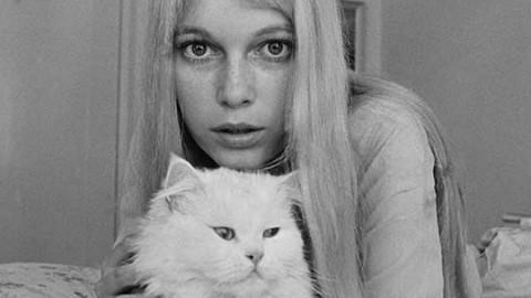 Giornata del gatto: questi mici sono delle vere star – IO donna