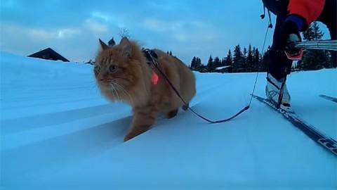 Jesper, il gatto sciatore – National Geographic Italia
