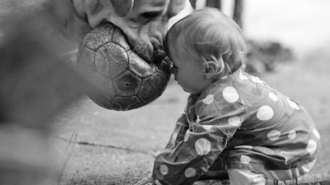 Cane: Qual è la Razza più Adatta al tuo Bambino – Vita Da Mamma