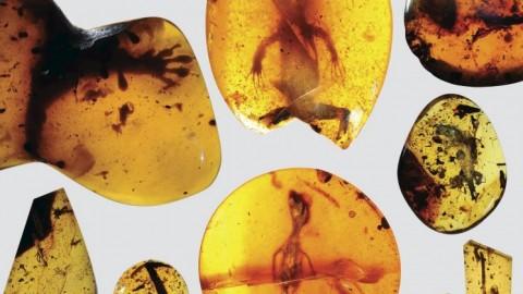 Myanmar, la lucertola nell'ambra ha 99 milioni di anni – La Repubblica