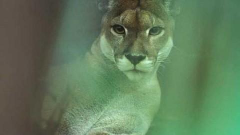 Lo sapevi che | Perché non esistono dei mammiferi verdi? – focusjunior.it
