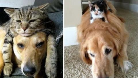 Pet 'oversize', in Italia 50% cani e gatti soffre di problemi di peso – Adnkronos