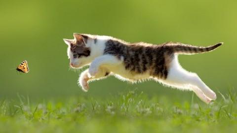 Alimentazione del gatto, 10 cose da sapere – Ok Salute e Benessere