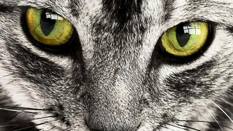 I cinque gatti più eroici dell'anno – GreenStyle