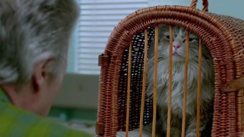 Nine Lives: Christopher Walken parla con Kevin Spacey in versione … – BadTaste.it – Il nuovo gusto del Cinema