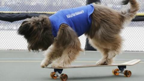 Come insegnare al cane ad andare sullo skateboard – Velvet Pets Italia (Blog)