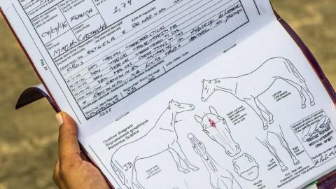 Ispezioni sulla detenzione dei cavalli: indagato anche un veterinario
