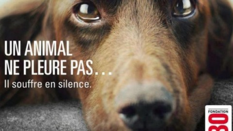 Il cane non ti abbandona. E tu: non abbandonare il tuo cane. Lo spot … – ItaliaNews24.net (Comunicati Stampa) (Blog)