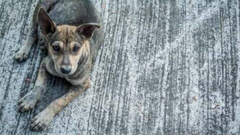 La bufala del numero di emergenza per i cani abbandonati in … – greenMe.it