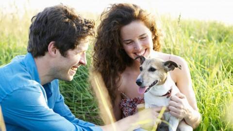 Separazioni e animali: quando il cane diventa oggetto di contesa – L'Huffington Post