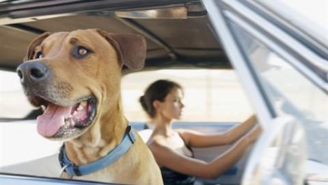 Vacanze e animali domestici. Soluzioni last minute adatte a tutti … – Vanity Fair.it
