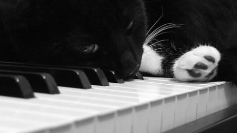 Udito del gatto e passione per la musica classica – Petpassion.tv