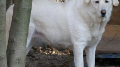 """Cani da caccia """"obiettori"""" abbandonati dai loro padroni – il Corriere delle Alpi"""