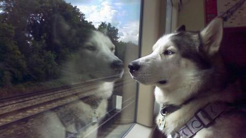 24zampe | Contro gli abbandoni cani in treno a 5 euro: è boom di … – Il Sole 24 Ore