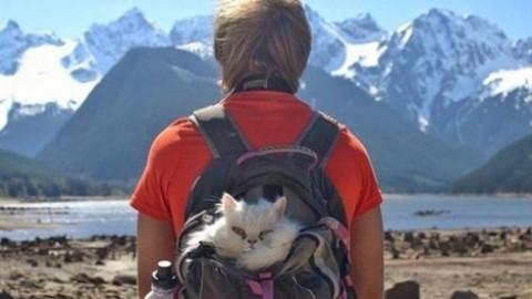 In campeggio col gatto? Si può (ed è trendy) – Vanity Fair.it