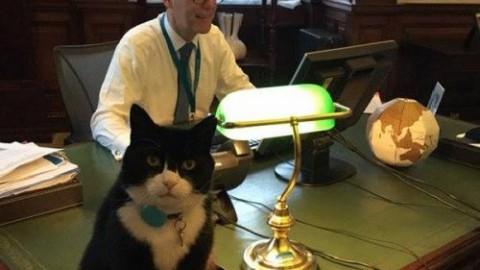 Gatti che fanno storia e guadagnano l'attenzione della stampa – AgoraVox Italia