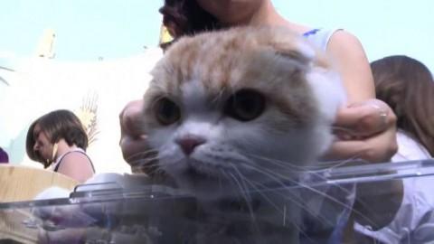 """Gatti in passerella alla premiere di """"Nine Lives"""" a Hollywood – askanews"""
