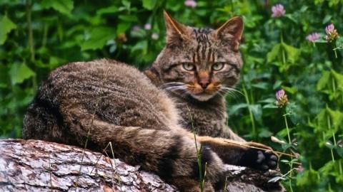 Da settembre chip gratis per i gatti domestici | l'Adige.it – l'Adige – Quotidiano indipendente del Trentino Alto Adige