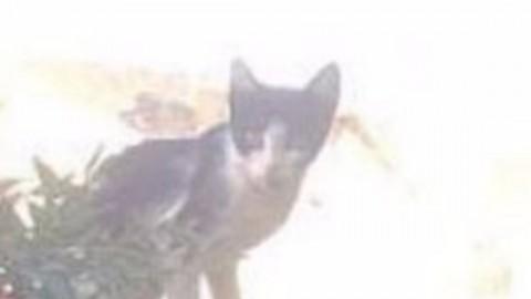 Muore il padrone, la reazione del gatto. La scena commovente al … – LiberoQuotidiano.it