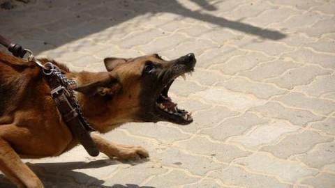 Cani, doppia aggressione: ferita la padrona e un pastore tedesco – MBnews