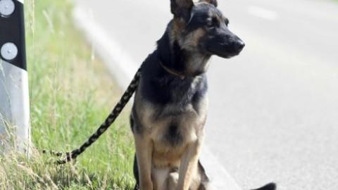Abbandono di animali: è punito con l'arresto fino ad un anno – ParmaDaily.it