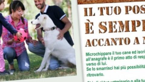 Abbandono animali, Parma aderisce a campagna ministeriale – ParmaDaily.it