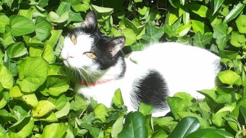 Spazio Donna: 8 Agosto The World Cat Day, scopri tutti i posti in … – Pescara News (Registrazione)