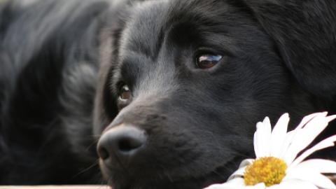 Alternative alla Protesi nel Cane