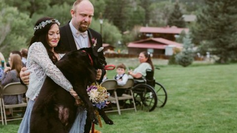 Il cane che ha accompagnato all'altare la sua proprietaria prima di … – greenMe.it