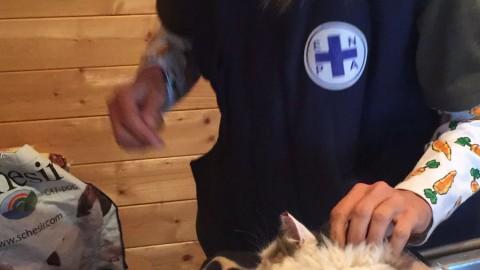 Terremoto, storie di gatti: dopo 16 giorni Pietro miagola ancora sotto … – Il Sole 24 Ore