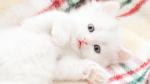 Accarezzare, coccolare e baciare i gatti è rischioso (soprattutto i … – L'Huffington Post