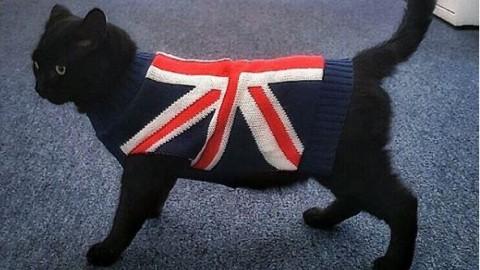 Londra, tutti i gatti della premier May: al ministero del Tesoro arriva … – Corriere della Sera