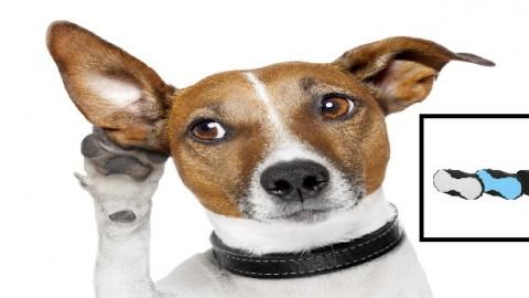 Ottima notizia per chi ama i cani, arriva 'T-Pets', il collare con … – InterNapoli.it