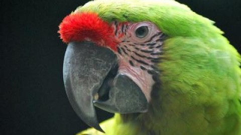 Animali: al Parco Natura Viva si fa la conta d'autunno dei nuovi nati – Adnkronos
