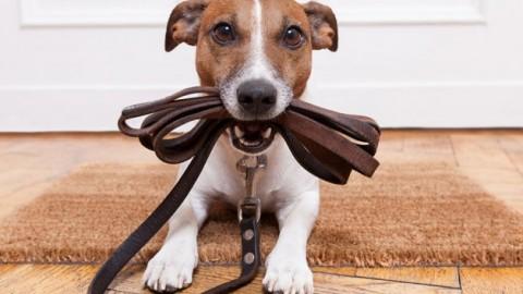 Animali domestici nei condomini: quando sono ammessi? – ForexInfo.it